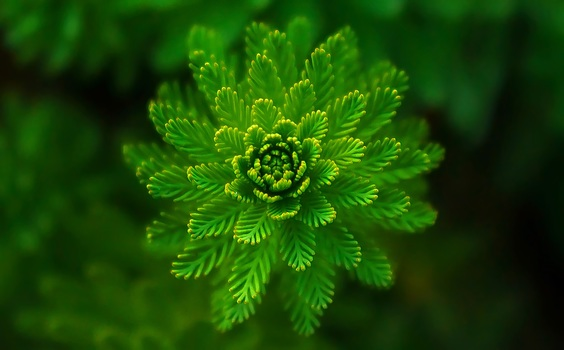zveto