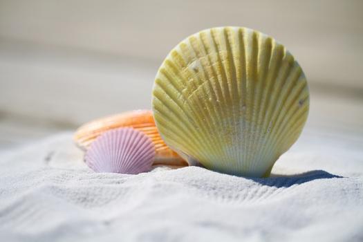 Морские препараты. Massimo Mangialavori