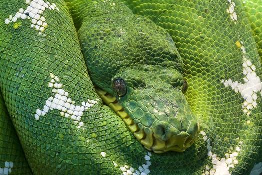 Python (Jhanvi Patel)